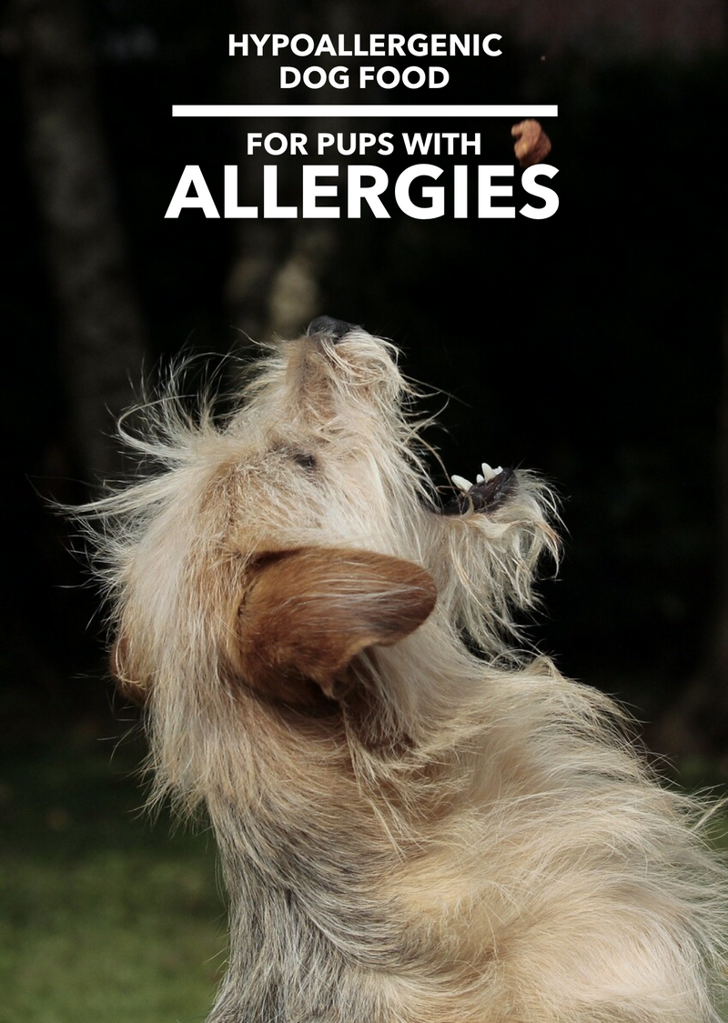 Hypoallergenic Dog Food – Because Dogs Have Allergies, Too