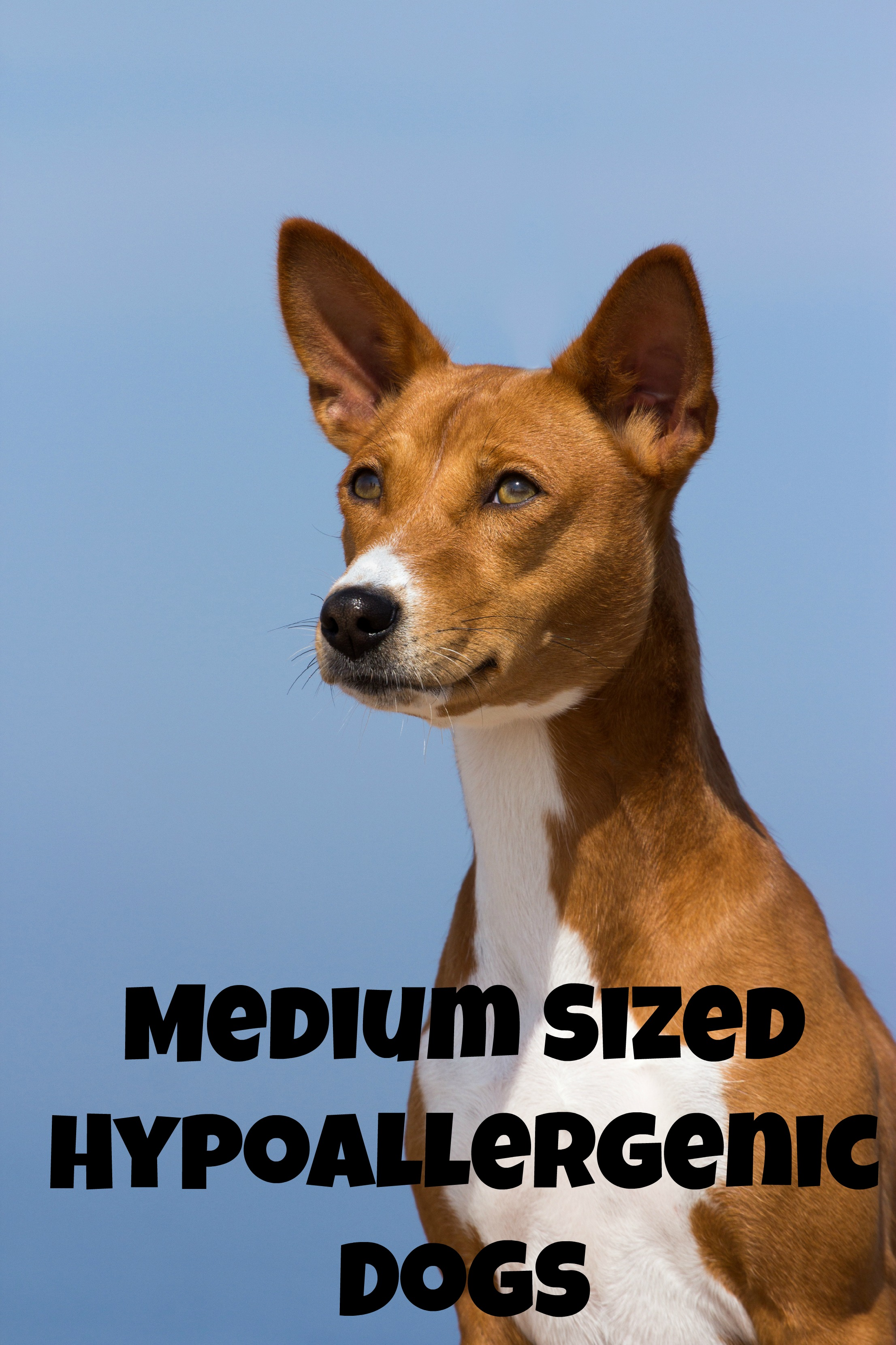 Medium Sized Dog Breeds List With Pictures