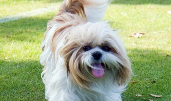 Why Your Hypoallergenic Dog Can Still Make you Sneeze