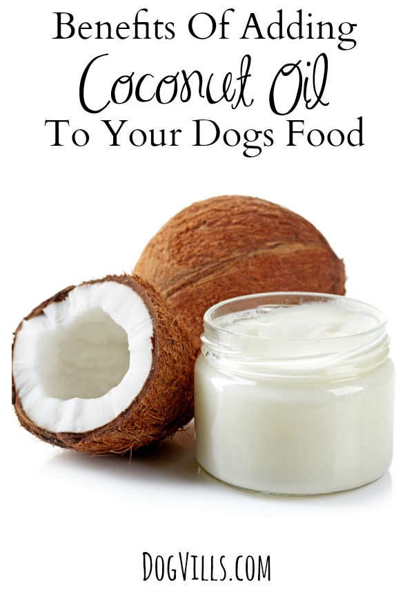 How to Feed your Dog or Cat Coconut Oil