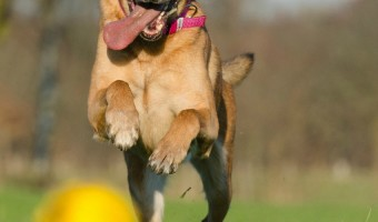 Get the Weight off With Hill's Metabolic Dog Food