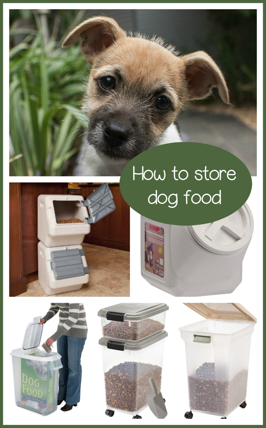 How to Store Dog Food – Tips to Keep Your Dry Food Safe and Sound