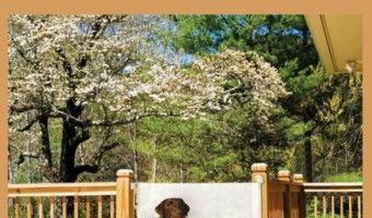 Retractable Dog Gates – Safety and Convenience