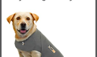 Wondering if the ThunderShirt really works to alleviate anxiety in dogs? We checked into it and shared out findings with you! Check it out!