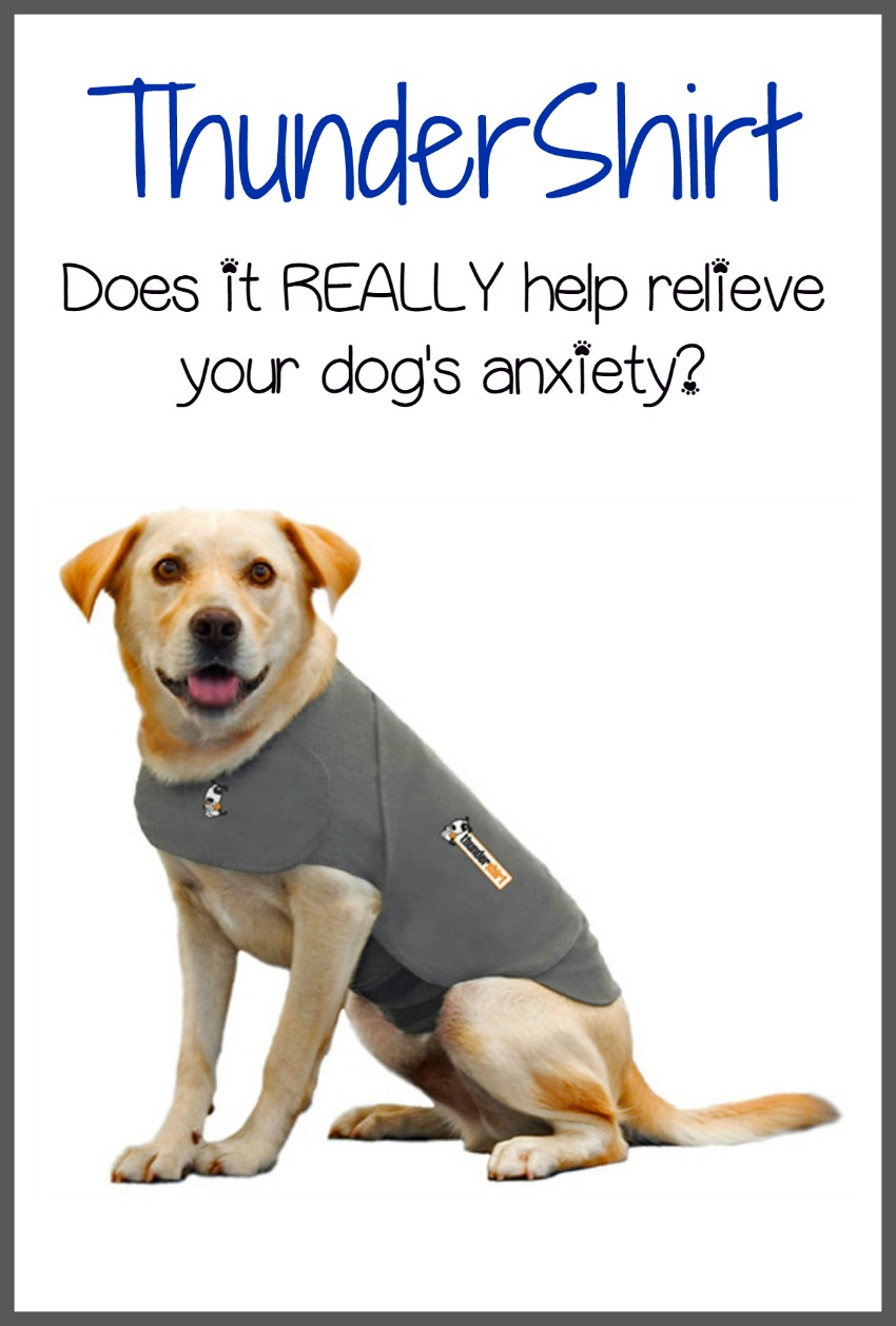 Does The ThunderShirt Really Alleviate Anxiety In Dogs?