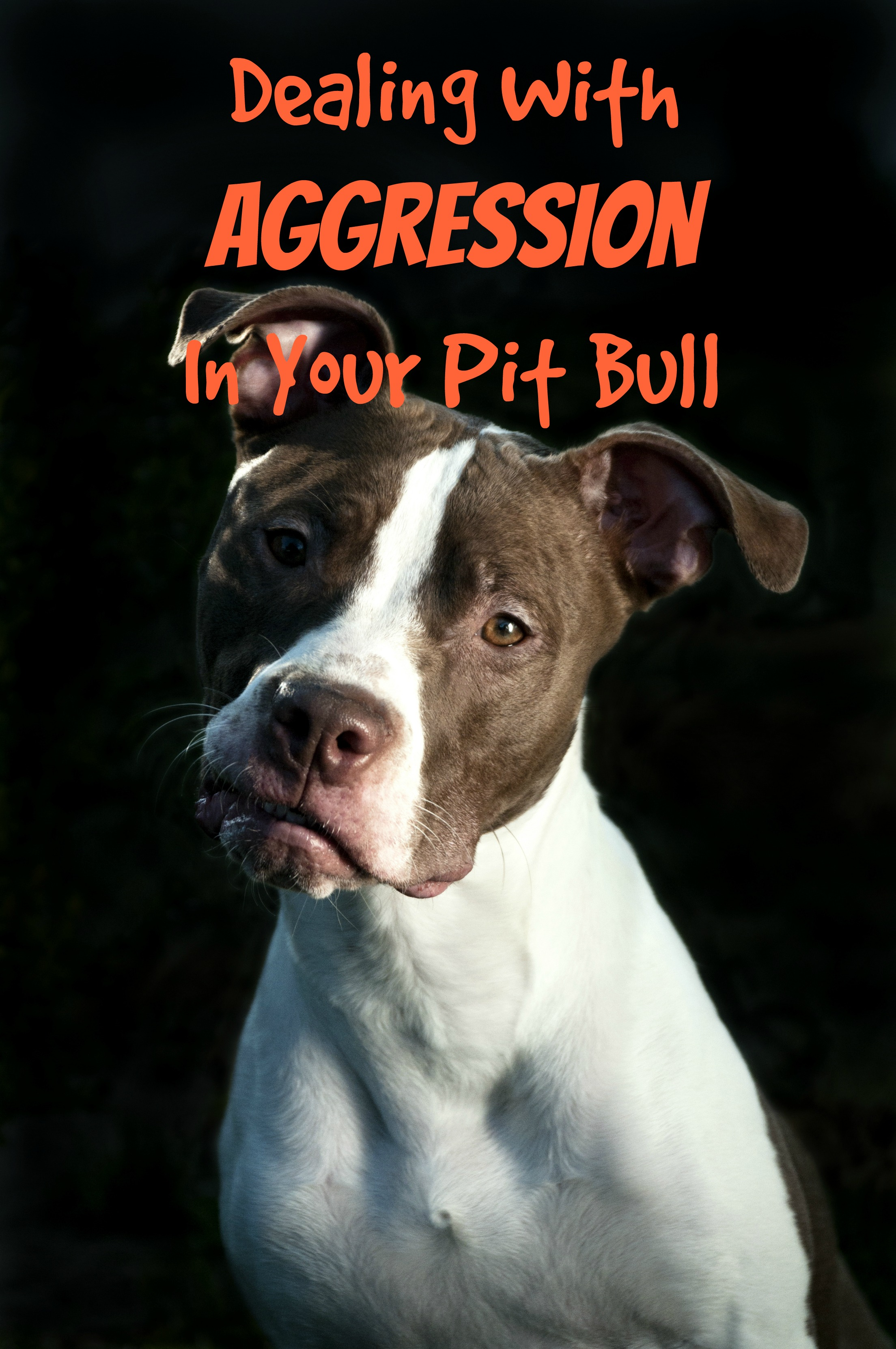 Pitbull Puppy Training Tips: Dealing With Aggression