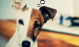 There are many great options when it comes to hypoallergenic dry dog food. There are quite a few companies that make hypoallergenic dry dog food. Check out our favorites.