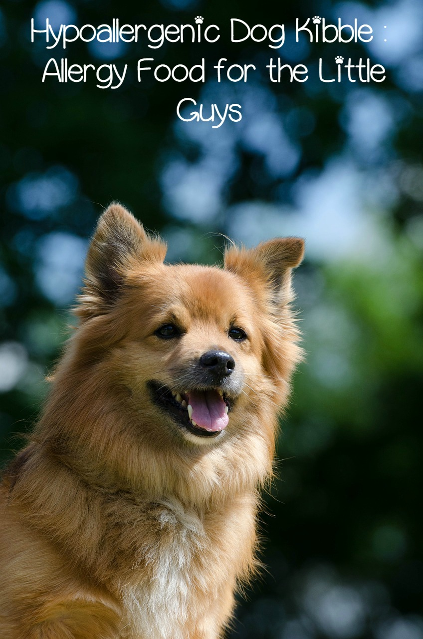 Hypoallergenic Dog Kibble – Allergy Food for the Little Guys
