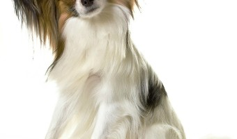 Hypoallergenic dog food is hot right now. So many dogs have food allergies that many people ask if they can make hypoallergenic dog food at home.