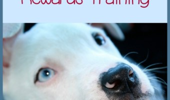 Pitbull Puppy Training Tips – Touch, Crate, and Rewards Training