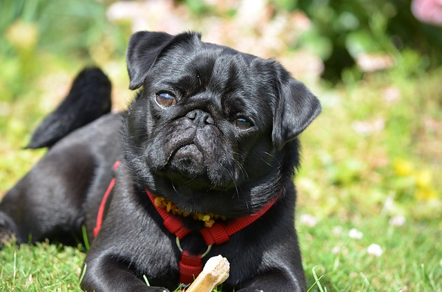 5 Best Dog Breeds for First Time Owners