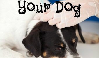 Are dog vaccines a good idea or dangerous? Should you get them for your canine companion? Check out our thoughts & see which vaccines we won't skip!