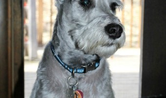 If you're looking for a hypoallergenic dog to do agility, then look no further. There are a few hypoallergenic dog breeds that are great for agility.