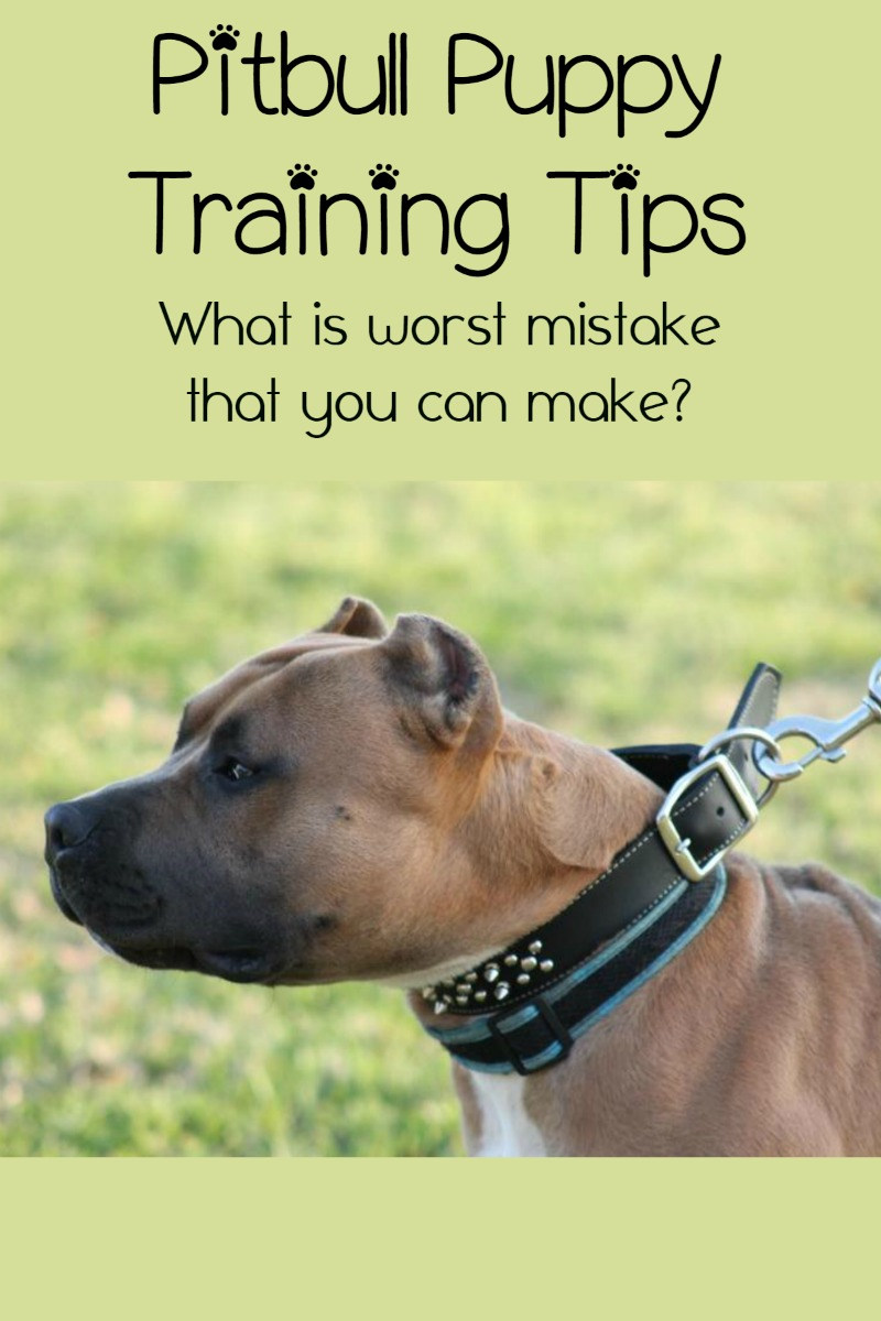 Pitbull Puppy Training Tips – The Biggest Mistake Owners Make