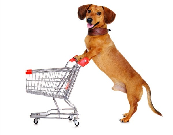 Major stores that allow dogs in the us extensive list solutioingenieria Gallery
