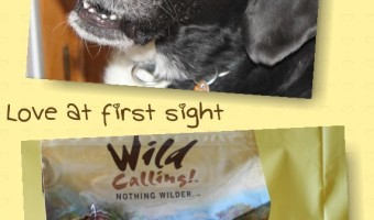 Looking for a dog food with a real story behind it? Check out Wild Calling! and see how they've mastered The Art of Nutrition. It's love at first sight!
