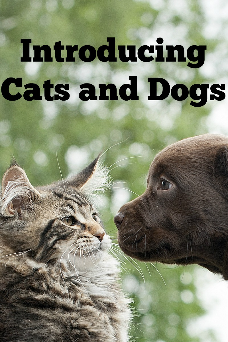 Cats & Dogs: Natural Born Enemies or BFFs? It's All in How You Introduce Them!