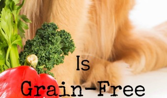 Grain-free dog food is all the rage, but is it just a passing fad or is it REALLY better for your dog? Check out our thoughts on grain-free & decide.