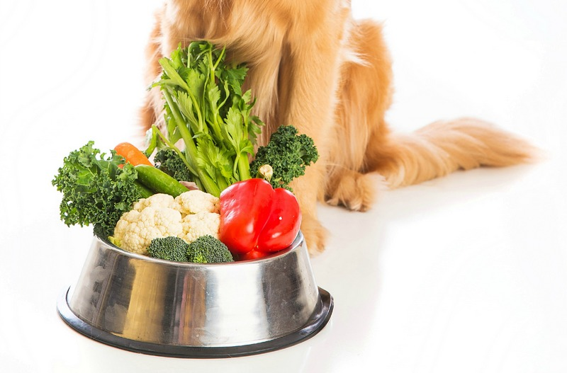 how to help a dog lose weight fast