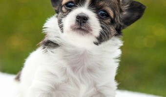 For some of the best puppy training tips, free training guides are a great resource. I've collected a variety of guides chock full of puppy training tips.