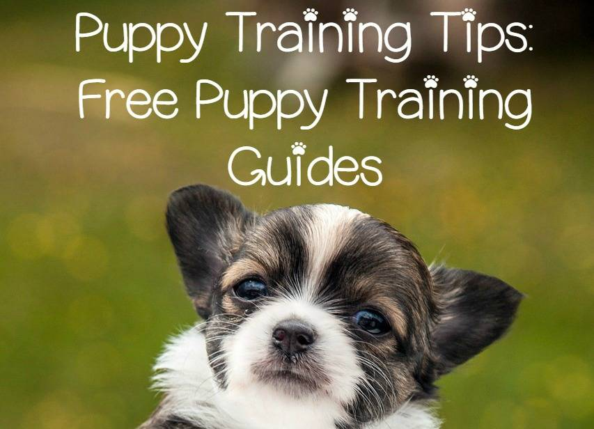 Puppy Training Tips - Free Puppy Training Guides