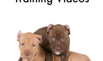 These pitbull puppy obedience training videos aren't just a great way to learn how to train your pit, they're such a joy to watch! Which is your favorite?