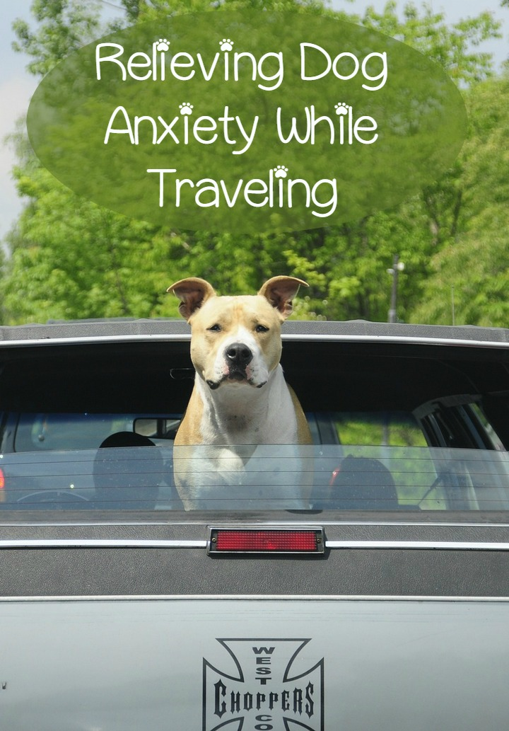 Relieving Dog Anxiety While Traveling