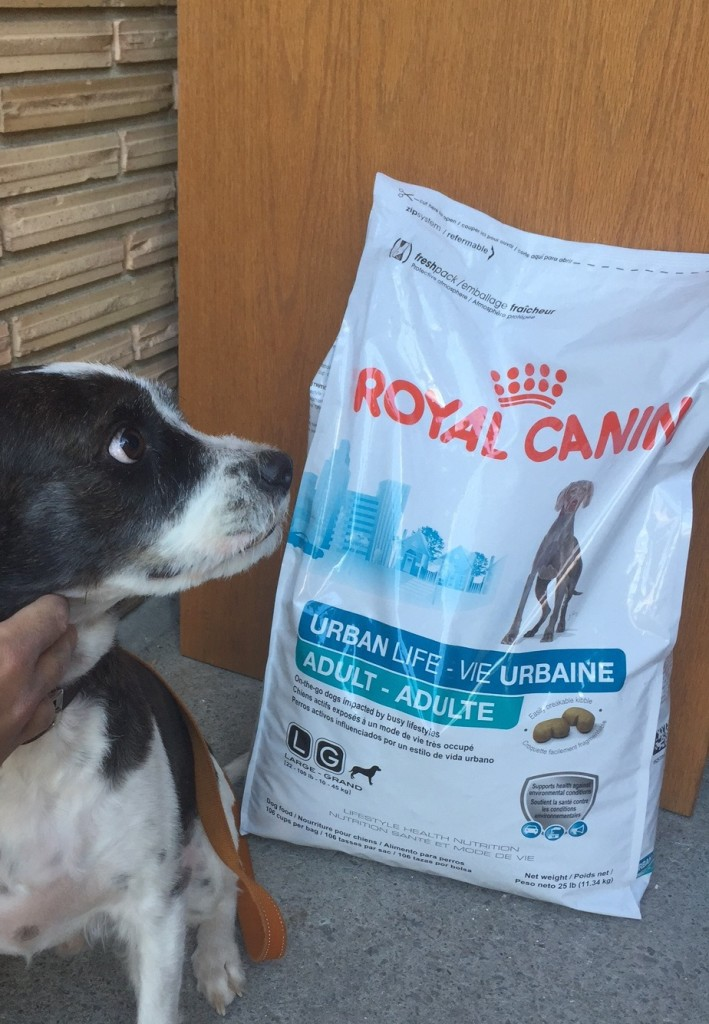 Give your city dog the best nutrition and help him overcome stressors with Royal Canin URBAN LIFE dog food, the first food made for where your dog lives.