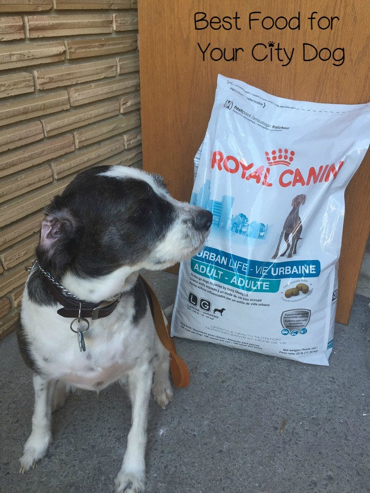 Feed Your City Dog Better with Royal Canin URBAN LIFE Dog Food