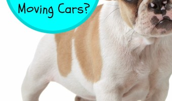 Does your dog freak out around moving cars? Check out our tips for keeping your pooch calm and easing his anxiety when you're out for a walk on the road.