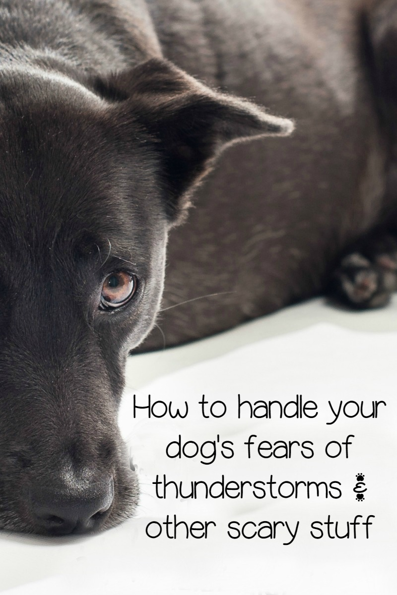 Fears in Dogs: Thunderstorms, Fireworks, Windy Nights, Oh My!