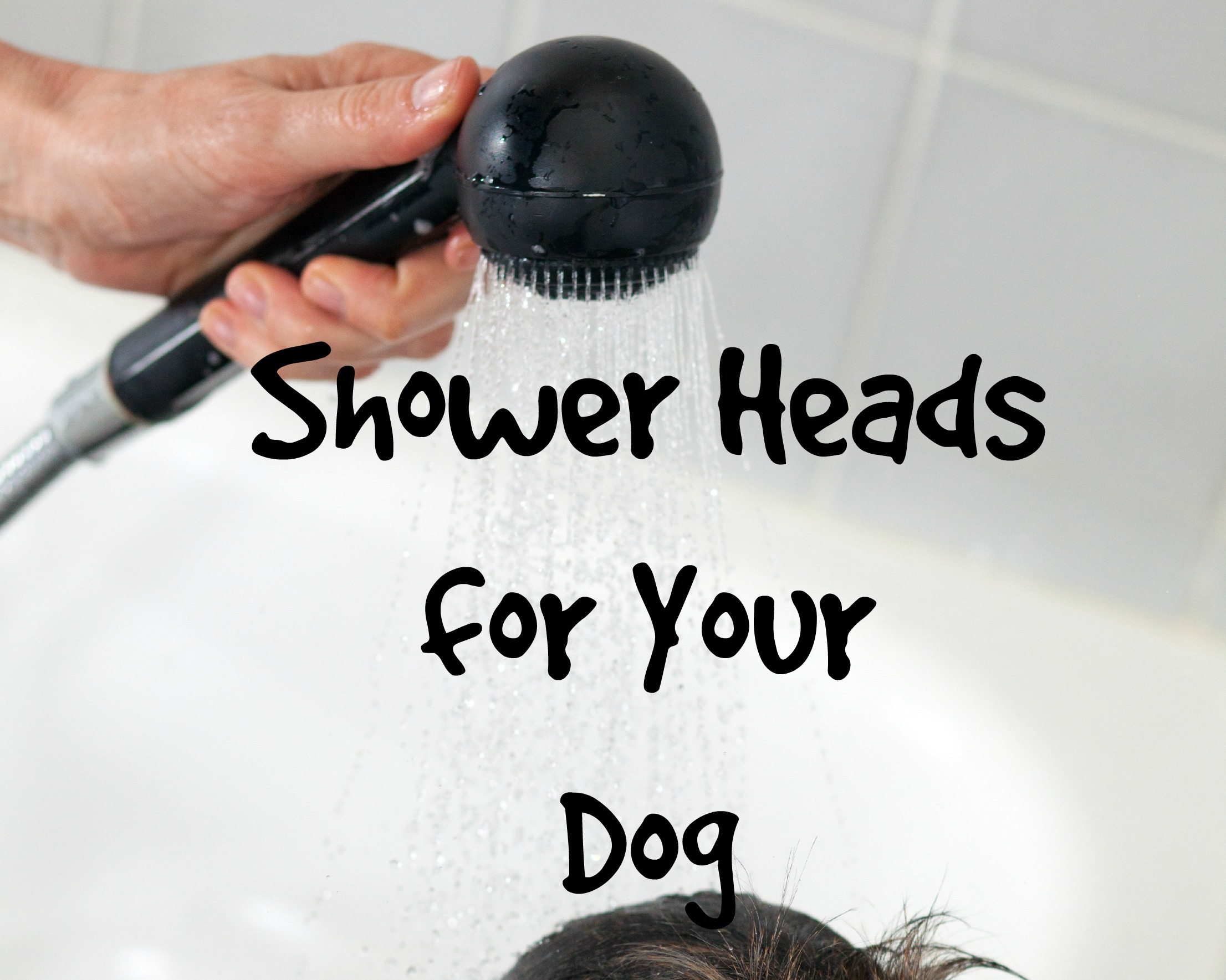 Choosing the Best Shower Heads for Your Dog