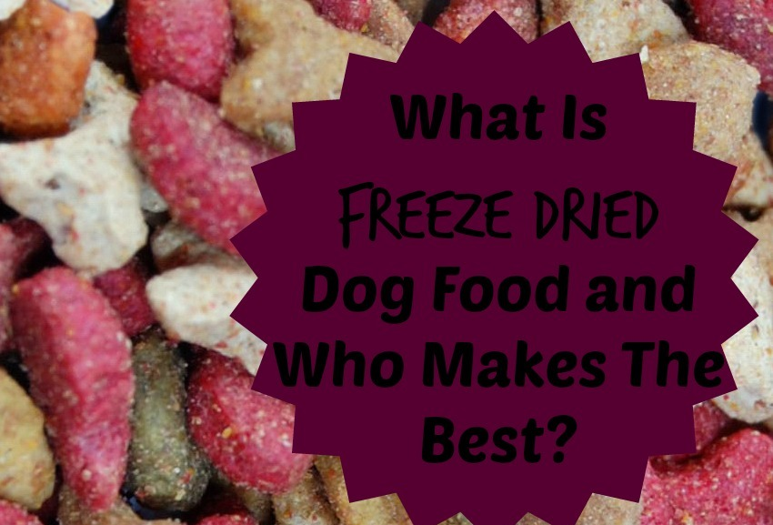 What Is Freeze Dried Dog Food And Who Makes The Best