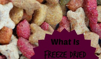 What is freeze dried dog food? How can you find the best brand for your canine pal? Check out our answers to these questions & decide if it's right for you!