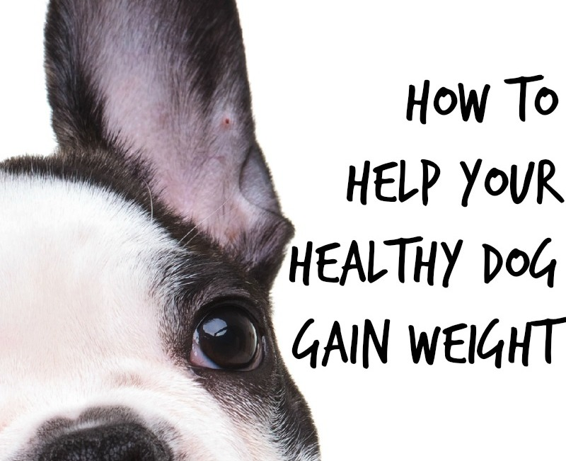 how to help a dog gain weight