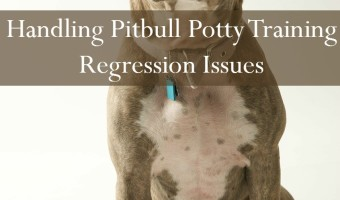 Today on Pitbull Puppy Training Tips, we'll be going over potty training regression, and why it isn't a thing. Pitbull puppy training tips will explain.