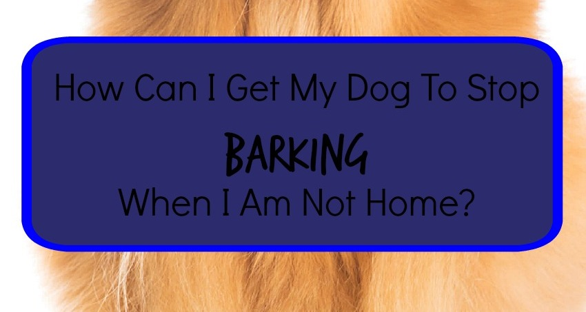 tips to stop your dog from barking when you 39 re not home