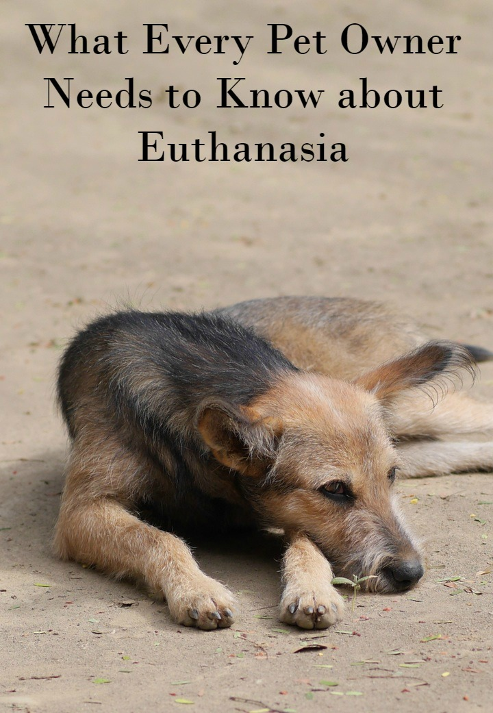 What Every Pet Owner Needs to Know about Dog Euthanasia