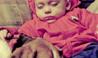 Dogs and babies go together like peanut butter and jelly, but you have to prepare the sandwich. Dog and babies can get along great if you approach it well.