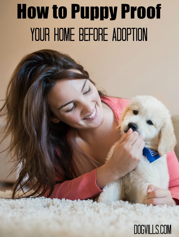 Getting ready to bring home a new family friend? Check out our tips on how to puppy proof your home before adoption to keep your little guy safe!