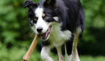 Rawhide bones are one of the best dog chews out there. They are made for chewing, not eating. That means rawhide bones help the chew fix without calories.