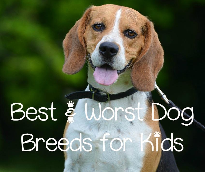 Best and worst dog breeds for kids dogvills - Best dog breeds kids ...