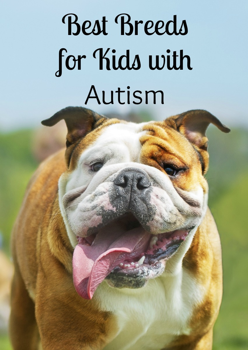 4 Best Dog Breeds for Kids with Autism