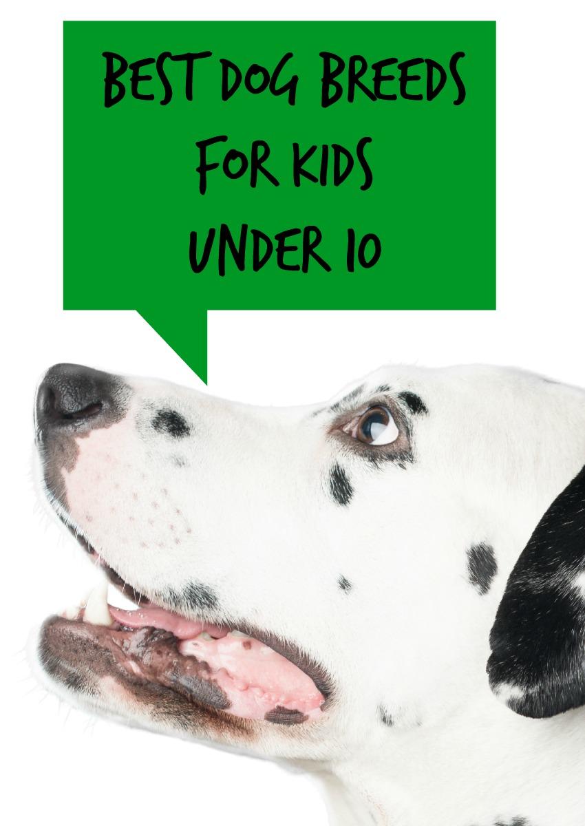 Best Dog Breeds for Kids Under 10