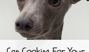 If your dog is a poop-eating fiend, you'll find yourself looking for ways to break this icky habit! Is cooking for your dog one of them? Find out here!