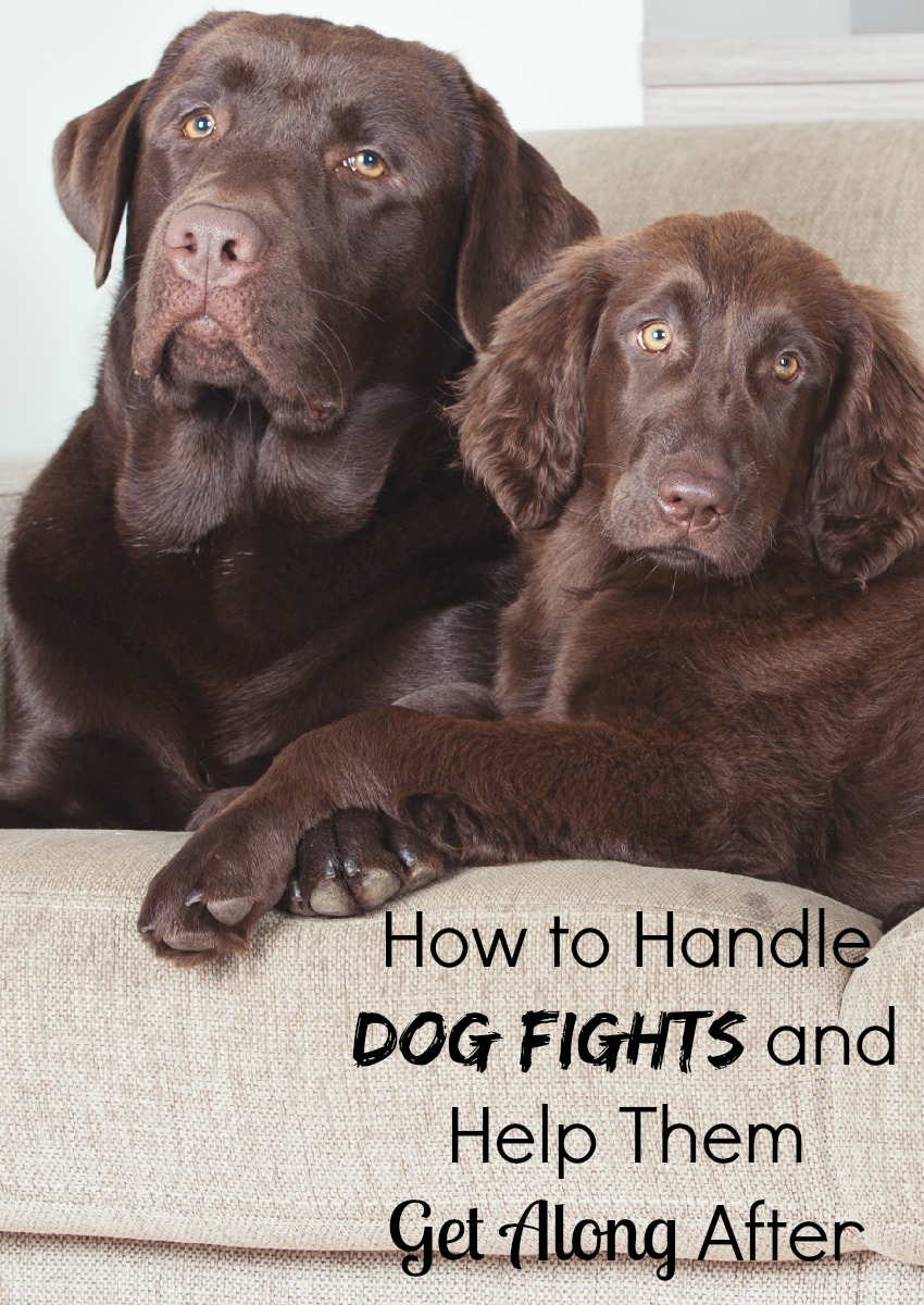 How to Handle Dog Fights and Help Them Get Along After