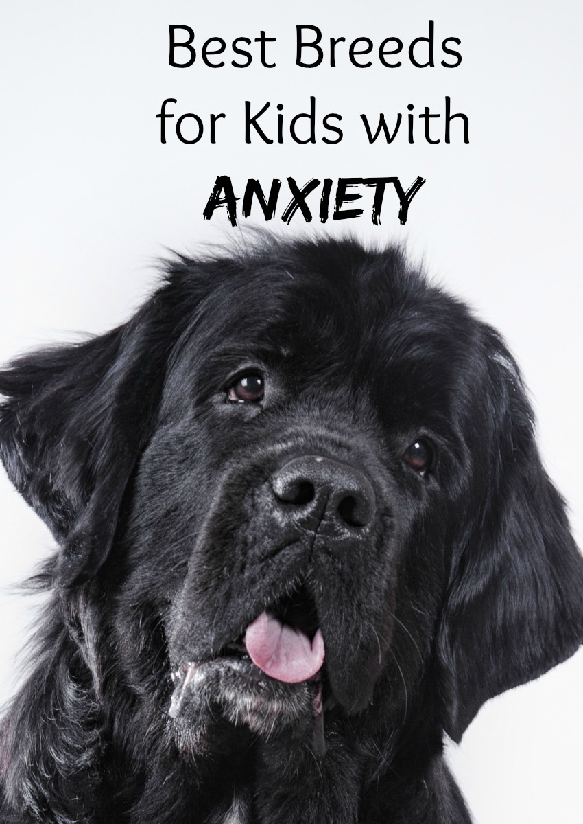 Best dog breeds for kids with anxiety dogvills for Best dog breed for you