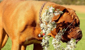Tips to Manage Extreme Seasonal Allergies in Dogs