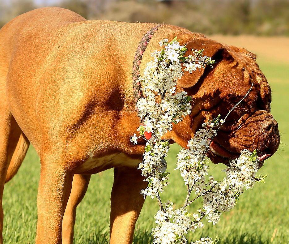 Image Result For Dog Food Allergy Symptoms