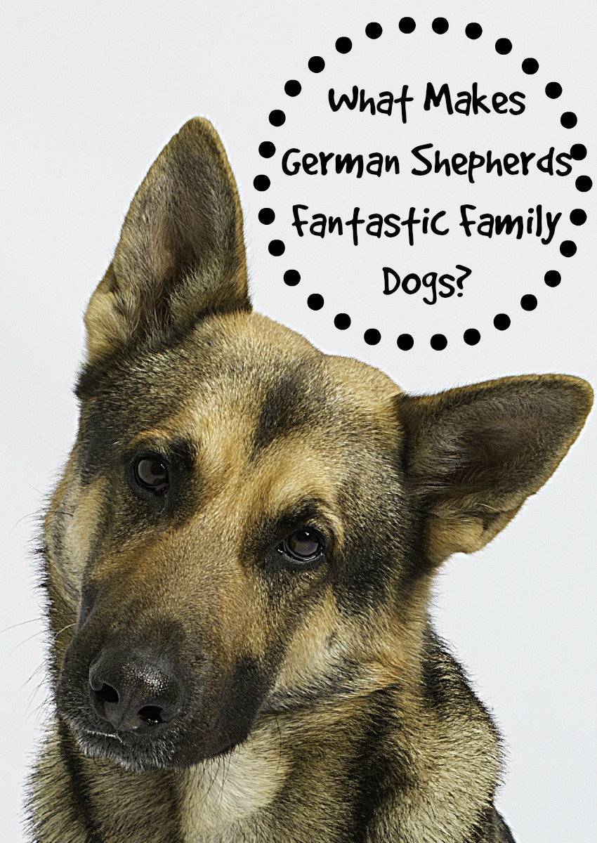 What Makes German Shepherds Fantastic Family Dogs?